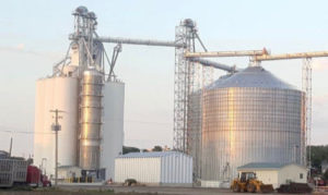 Grain conditioning